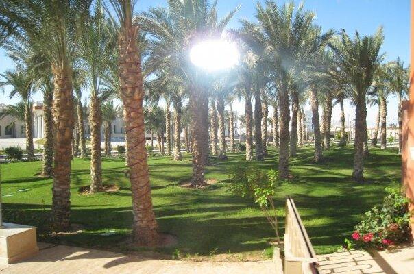 пальмы и солнце в Египте